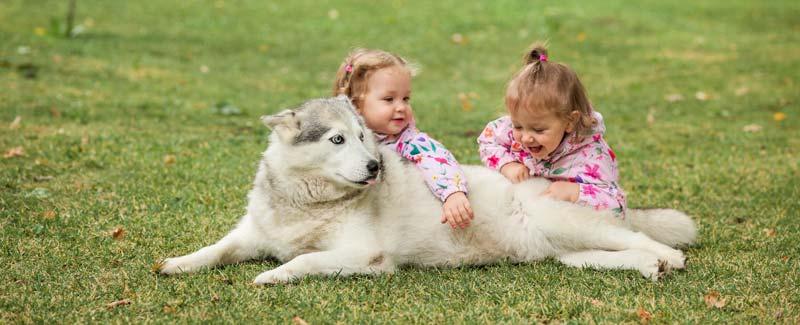 beneficiile-unui-caine-pentru-copii