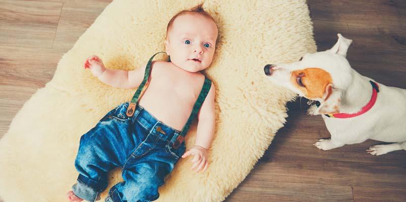 cainele-ajuta-la-dezvoltarea-copilului